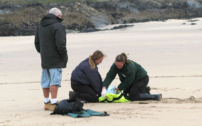 Pup on beach being rescued from the beach at St Ives Bay