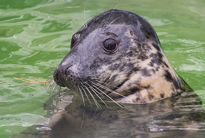 Annie at the Cornish Seal Sanctuary