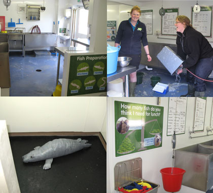 Behind the Scenes Tour at the Cornish Seal Sanctuary