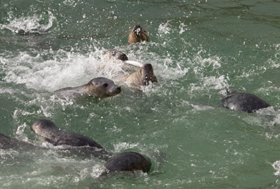 Seal Sanctuary To Be Run By Charity