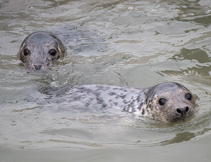 rescued grey seal pups from the 2015/16 season