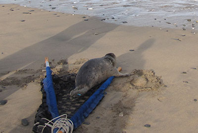 Seal Release on 6th June 2016