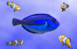 Find out about Dory and friends this Summer!