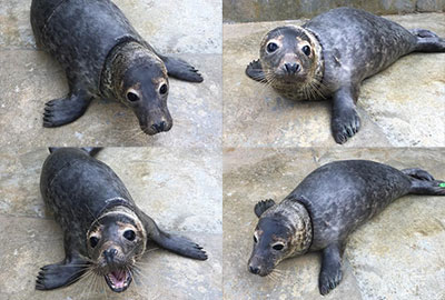Chain of Change at the Cornish Seal Sanctuary