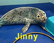 Jinny, a rescued grey seal pup from the 2017/18 season