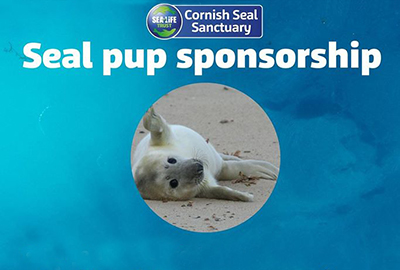 Name a Rescued Seal Pup