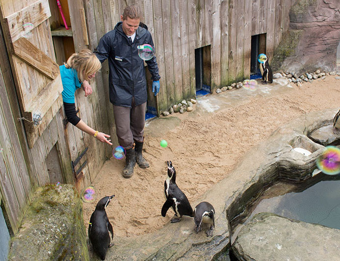 Penguins love playing with the ping-pong ball