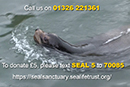 Cornish Seal Sanctuary offering locals exclusive annual ticket for the year