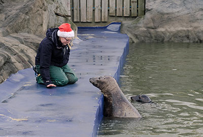 Poorly seal pups treated to some festive cheer