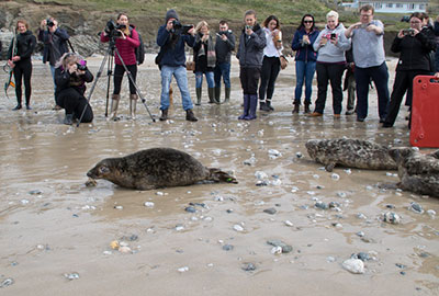 Charlestown - Seal Release - 26th March 2018