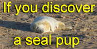 If you Discover a Seal