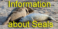 Information about Seals
