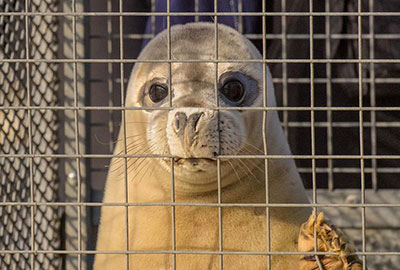 Seal Release - 23rd March 2016