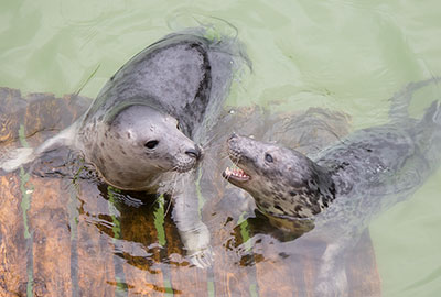 Rescued Seal Pups