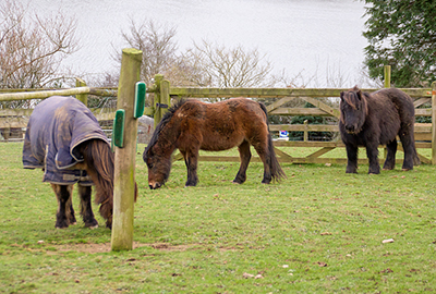 Ponies - Tuppence, Bracken and Muffin