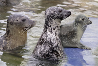Macey, Pippa and Lora at Hunstanton Sea Life Sanctuary