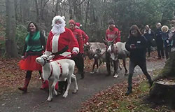 Meet Santa and his REAL Reindeers