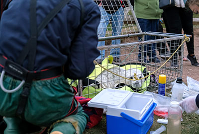 Seal rescue hospital relaunched with the help of Gillian Burke