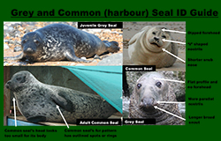 Seal ID Guide