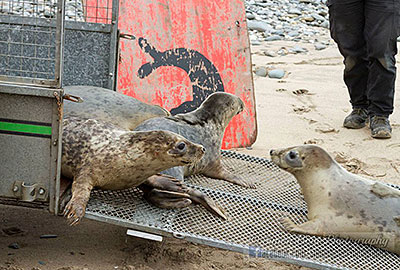 Seal Release - 10th May 2016