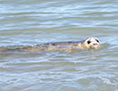 Seal Release - 28th June 2018