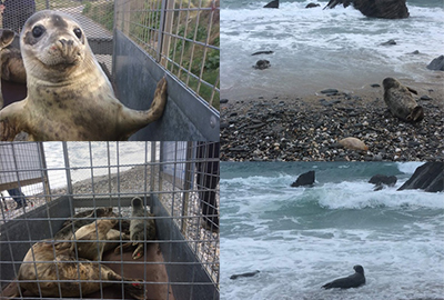 Seal Release - 2nd April 2019