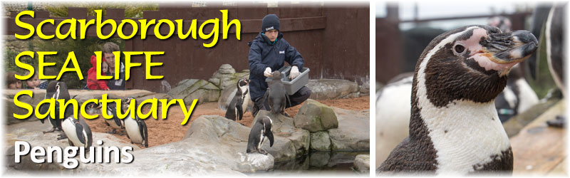 [The Scarborough SEA LIFE Sanctuary - PENGUIN ISLAND - NEW FOR 2015]