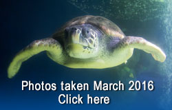 Scarborough Sea Life Sanctuary - March 2016