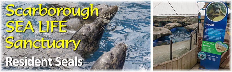 [The Scarborough SEA LIFE Sanctuary - Seals]