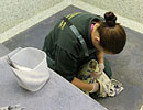 One of the animal care team